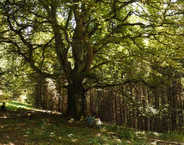 Kraftorte und Baumwesen